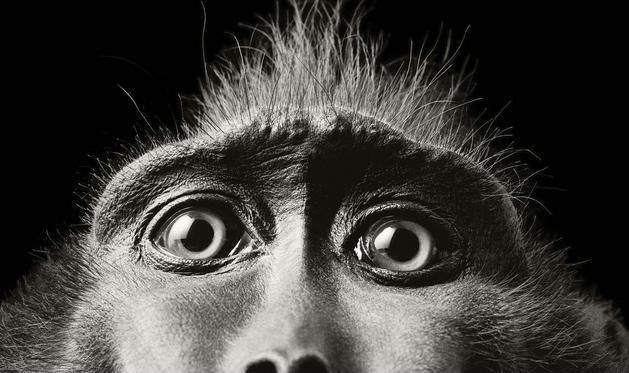 动物世界里的喜怒哀乐